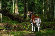 Les parcs de Virunga et Salonga renferment du petrole évalué à plus d'un milliard de dollars