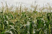 Près de 37 millions USD d'investissement de FIDA dans le secteur agricole en RDC