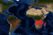 Le «deuxième poumon vert» du monde menacé par des incendies