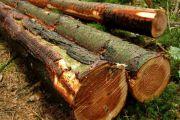 Secteur du bois : la profession défie l'Etat avec des moyens de l'Etat