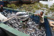 Sud-Kivu: plus de 600 Kg de tilapia vendus chaque jour à Muhumba