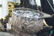 RDC : le gouvernement compte relancer la pêche industrielle