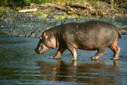 La RDC sollicite l'aide de la communauté internationale pour la protection de sa faune