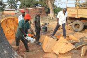 Haut-Katanga: les exploitants forestiers décrient la hausse du taux du permis de coupe du bois rouge