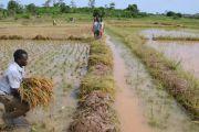 L'abandon de l'agriculture constitue l'une des causes de la pauvreté en Rdc, affirme la Banque mondiale