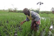 Près de 120 millions USD affectés au secteur de l'agriculture en RDC