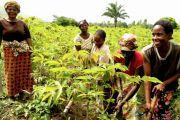 Agriculture en RDC : un collectif d'associations appelle à soutenir les familles plutôt que les industriels