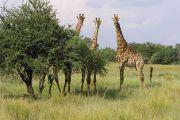 Nécessité de deux sites pour la mise en œuvre de l'écotourisme en RDC