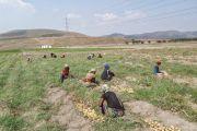 La  RDC bientôt dotée de la loi sur l'activité  semencière