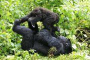 Le parc de Virunga sujette à la destruction de sa faune