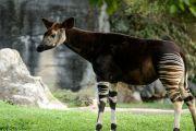 Délimitation de la zone de conservation de la réserve de faune à okapis