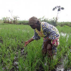 RDC : 4,4 milliards USD pour le Plan national de relance agricole